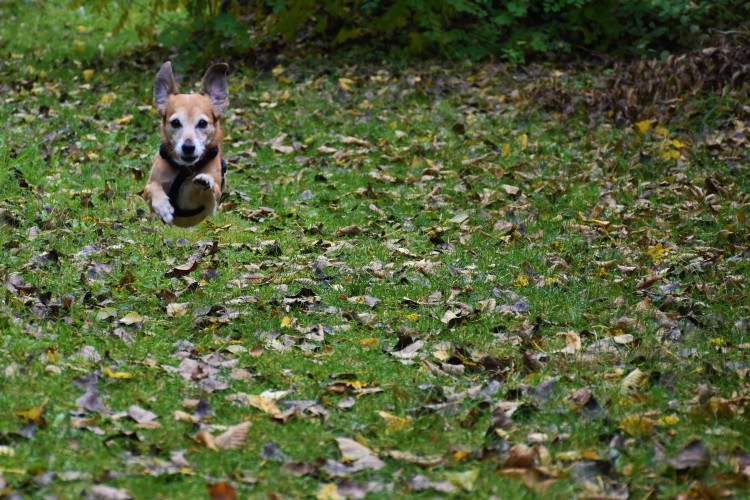 Spaziergang mit Hund in der Wachau